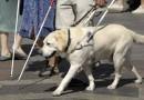 Zakon o kretanju uz pomoć psa vodiča